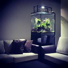 I prefer mercury vapors (Active UVHeat) for plants/animals, so I would need to cover light source a little better. Don't want it shining into people's eyes on the couch. Nice look though.
