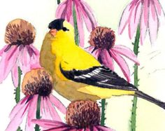 ACEO Limited Edition 2/25- Goldfinch and coneflowers, in watercolor