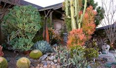 Photo: Deeter Buckner Design. The silvery-blue agave parryi quietly anchors this front yard garden. For more Deeter Buckner landscape designs, visit: http://www.deeterbucknerdesign.com/ #agave_parryi #euphorbia_tirucalli #aloe_plicatilis