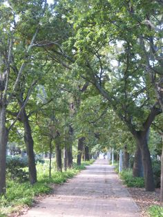 Care for a peaceful walk? I Am An African, Walkway, Cape Town, South Africa, Sidewalk, Country Roads, Gardens, Beautiful, Side Walkway
