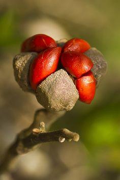 Seed Pod by Carlos Asanuma                                                                                                                                                                                 More