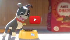 Have you Seen the Preview of Disney's New Animated Short Film featuring a Boston Terrier dog? Watch it Now! ► http://www.bterrier.com/?p=25987