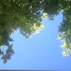 Early summer breeze #southernhemisphere #breeze #sky #video #tree