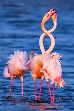 Flamingos, by yaki zander