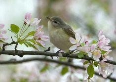 "Carol Freeman shared/ warblers she spotted at the ""Chicago Botanic Garden "" Spring Is Here, Hello Spring, Happy Spring, Love Birds, Beautiful Birds, Chicago Botanic Garden, Spring Sign, Spring Blossom, Spring Has Sprung"
