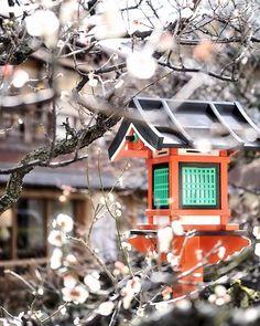 こんばんわ😊 『梅灯籠』 * 明日はお天気回復しそうですね⛅ * ステキな週末お過ごし下さい😊 * Location : Kyoto Japan * #そうだ京都行こう #祇園 #lovers_nippon #loves_nippon #team_jp_西(京都) #ptk_japan #icu_japan #igersjp #photo_jpn #wu_japan #jp_gallery_member #東京カメラ部 #ig_japan #whim_life #bestjapanpics #photo_jpn  #wow_nihon #phos_japan #instagramjapan #loves_united_members #airy_pics #ray_moment #loves_united_asia #ig_photosentez #explorejapan #loves_united_earth #daily_photo_jpn