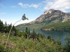 Waterton Lake Trail