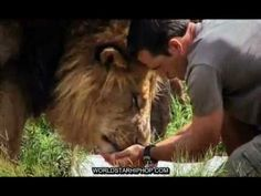 are some of the most dangerous animals known to man. BUT there is one man… Animals And Pets, Cute Animals, Kevin Richardson, Beautiful Lion, Dangerous Animals, Cheetahs, Hyena, All Gods Creatures, Beautiful Creatures
