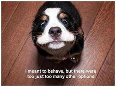 haha funny #dogs #pets