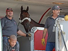 Triple Crown winner American Pharoah stepped off the van at Saratoga Race Course at precisely 3 p.m. Aug. 26 for his next assignment, the $1.6 million Travers Stakes (gr. I) coming up Aug. 29.