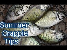 How To Locate Crappie In The Summer - YouTube