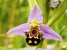 Impressionante: orquídeas parecidas com animais! | Diário de Biologia