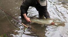pike flyfishing - peche brochet mouche