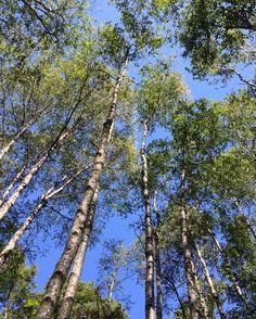 Luonto kauneimmillaan #venlojenvaellus #luonto #elämysliikuttaja