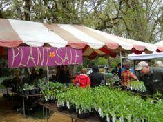 Pisgah Arboretum Wildflower Festival and Plant Sale, near Eugene, OR (May) Backyard Plants, Backyard Farming, School Fundraisers, Farm Stand, For Sale Sign, Plant Sale, Flower Farm, Wild Flowers, Baby Gifts