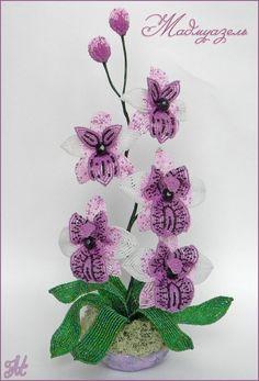 "Орхидея ""Мадмуазель"""