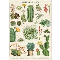 Cacti And Succulents Wrapping Paper / Poster from Present Indicative