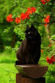 Cat - Queen of the garden.