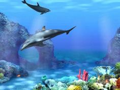 Animated Dolphins wallpaper