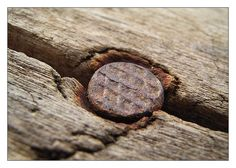 Nagel im Holz - Makrofotografie - New Ideas Macro Lens Photography, Microscopic Photography, Micro Photography, Texture Photography, Fine Art Photography, Amazing Photography, Patrick Nagel, Grunge Tattoo, Turkish Art