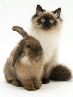 rabbit-cat04.jpg