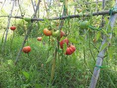 Stai Sereno: Italia terzo Paese in Ue per superfici coltivate c...