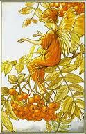 cicely M. barker - Google Search