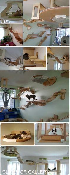 Ideensammlung für sportliche Katzen
