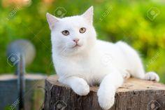 cat is waiting for rat http://ift.tt/2eutq5J