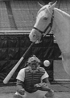 Reader Question: Which Is More Likely To Happen- A Horse Wins Baseball's Triple Crown Or A Human Wins Horse Racing's Triple Crown? 70s Tv Shows, Old Shows, Mister Ed, Great Names, Tv Westerns, Strange Photos, Famous Movies, Palomino