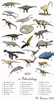 Here is a retrospect of some of the prehistoric species described in year From Aardonyx, to Guiyu and Puijila to Darwinopterus, it's nice to see t. 2009 in palaeontology Dinosaur Life, Dinosaur Art, Animals Images, Animals And Pets, Cute Animals, Dinosaur Pictures, Extinct Animals, Prehistoric Creatures, Prehistory