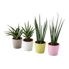 IKEA - SANSEVIERIA, Pflanze mit Übertopf