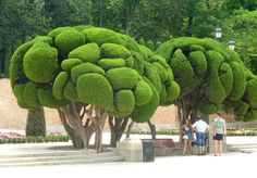 Topiary Trees Are A Beautiful Addition To Your Landscape Design Topiary Garden, Topiary Trees, Garden Trees, Garden Art, Topiaries, Bonsai Garden, Trees And Shrubs, Trees To Plant, Unique Trees