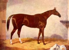 Stockwell(1849)The Baron- Pocahontas By Glencoe. 4x5 To Orville, 5x5x5 To Waxy & Penelope. 5x5 To Whiskey. 16 Starts 11 Wins 3 Thirds. Won 2000 Guineas(Eng), St Leger S(Eng), New Market S(Eng). Great Yorkshire S(Eng). Leading Sire In Eng & Ire In 1860,1861,1862, 1864,1865,1866, & 1867. Full Brother To Rataplan.