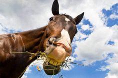 Grinsendes Pferd, jetzt bestellen auf kunst-fuer-alle.de