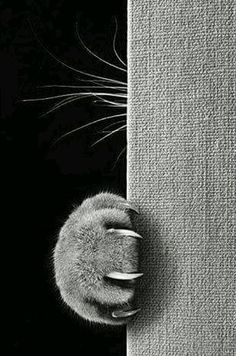 Fantastic photo of cat's paw and whiskers.
