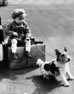 miles and emma: Children & Dogs: With a Special Focus on Welsh Terriers and Other High Prey Drive Breeds