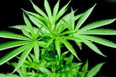 How Washington Could Become Even More Marijuana-Friendly