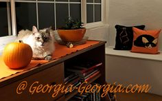 Awaiting Caturday and the first days of Autumn. Fall into Autumn @ Georgia-Georgia.com ………. #Autumn #Fall #Weekend #Caturday #AutumnEquinox #Equinox #Pumpkin #Orange #Wednesday #ThrowPillows #Pillows #Bats #Fox #FennecFox #Siamese #Cat #Lynxpoint #kitten