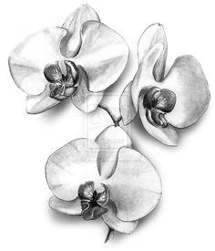 Amazing Orchid Flowers Tattoo Design