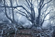 "Mother Of The Forest - <a href=""http://instagram.com/kilianschoenberger/"">@kilianschoenberger I N S T A G R A M</a>   <a href=""https://www.facebook.com/pages/Landscape-Photography-by-Kilian-Schoenberger/304631876263547"">L A N D S C A P E   P H O T O G R A P H Y facebook</a>"