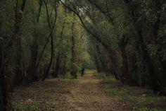 Bike through the Danube riverine forests