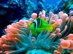 Uma fábrica de cosméticos, que terão como matéria-prima principal algas marinhas, será implantada na Ilha de Itaparica (BA). O empreendimento, que era um ...