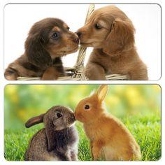 Estas bellezas comparten un beso, celebrando el Día Internacional del Beso.  #PetsWorldMagazine #RevistaDeMascotas #Panama