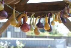 Decorating the Fall Harvest http://www.shopterrain.com/harvest_decor #gourd #garland