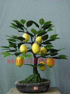 20 pcs lemon tree seeds mini bonsai fruit lemon ,easy grow NO-GMO fruit and vegetable seeds for home garden planting