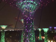 Super tree / singapore