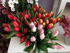 Tulipany i inne kwiaty sezonowe
