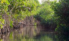 Recorriendo un impresionante manglar en San Blas, Nayarit