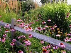 Generally good garden ideas